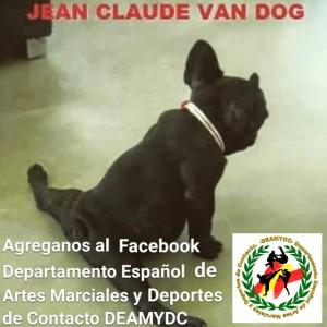 deamydc perro